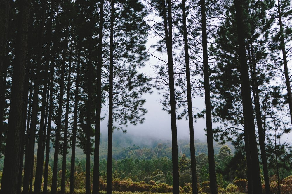 western_cape_tsitsikamma_storms_river_forest_ferns_stormy_couple_session_0722.jpg