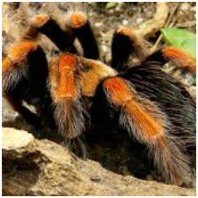 Your fear and phobia of spiders can be a thing of the past.  Leave that fear behind you with hypnotherapy for fear of spiders.