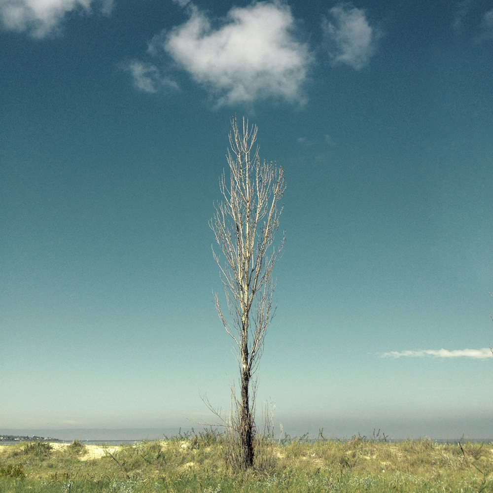Personal project of solitary trees taken with my Iphone around Uruguay