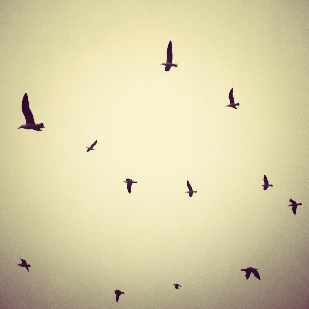 birds_h.jpg
