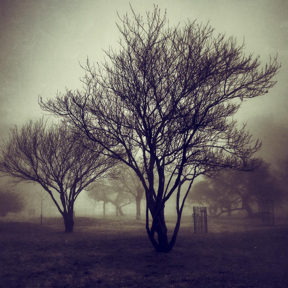 fog_h.jpg