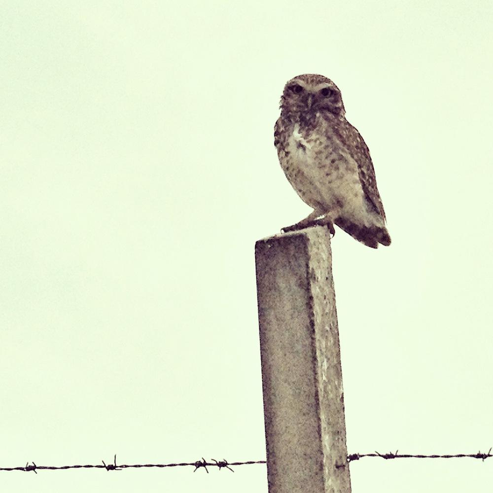 owl_h.jpg