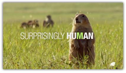 motion_thumbnails_animalplanet.png