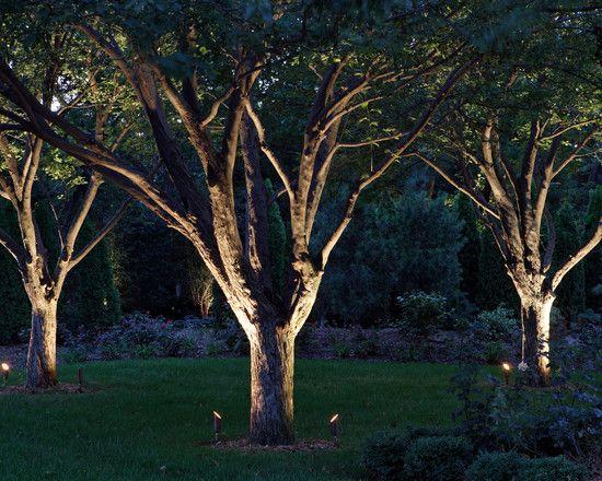 Aangelichte bomen