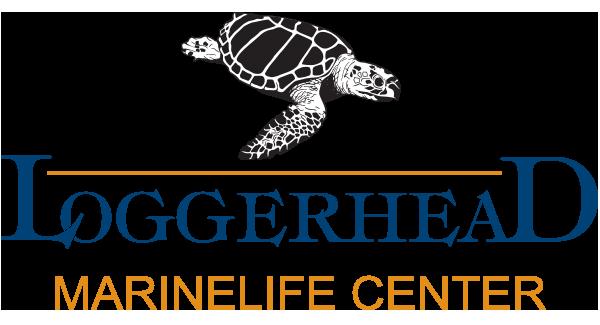 loggerhead MLC logo.png