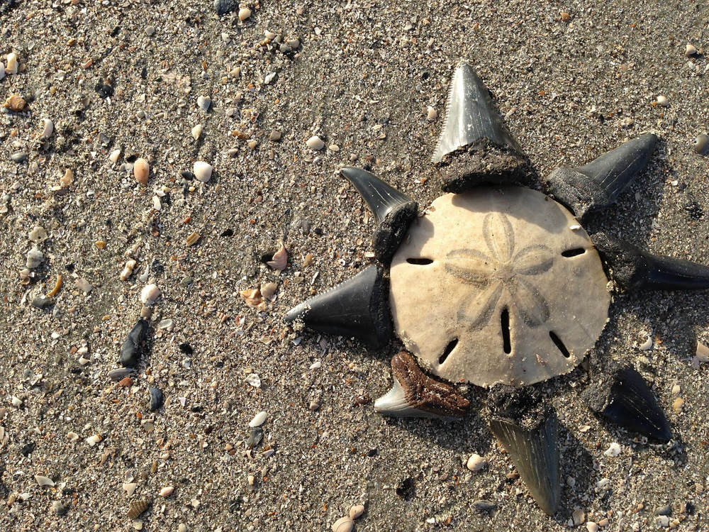 Shells in Charleston, SC