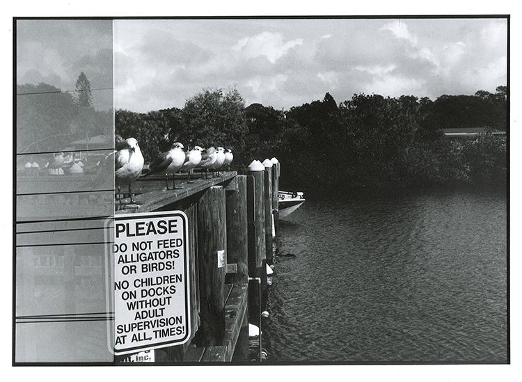 Do not feed alligators