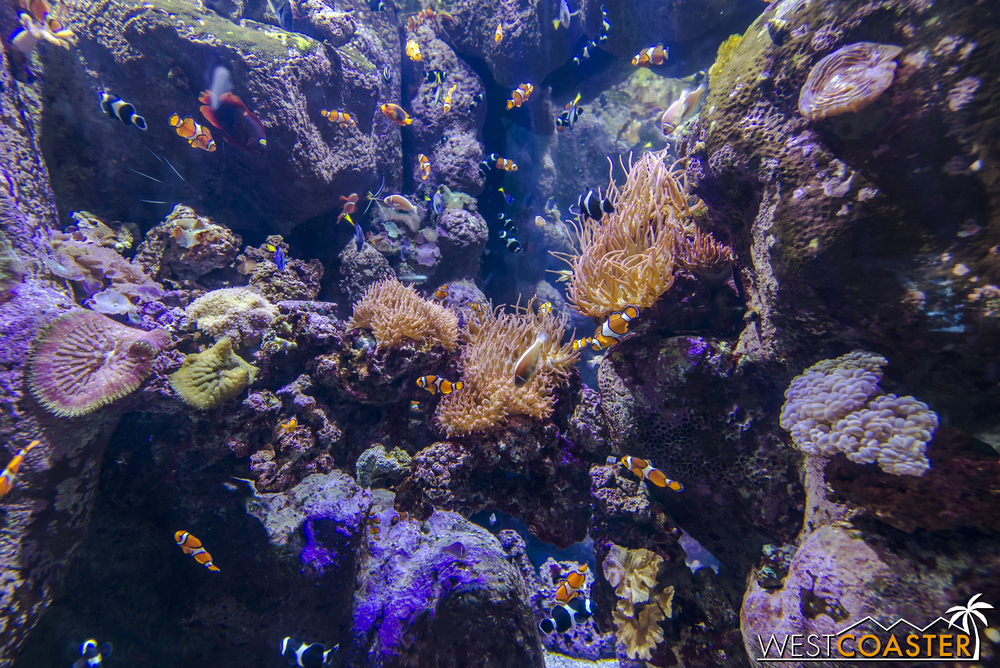 A variety of tropical fish can be found here, including Nemo's and Dory's (clownfish and blue tangs).