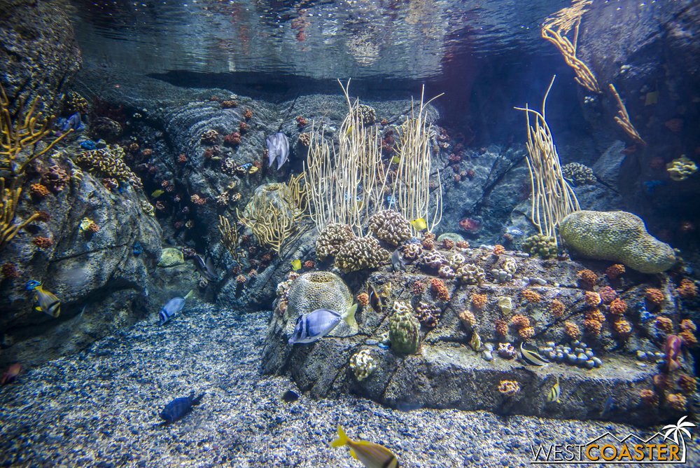 Coral and other exotic sea life can be found in the Tropical Pacific section of the Aquarium.