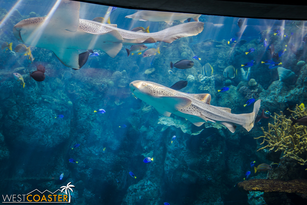 Shark Lagoon features a variety of different sharks and rays.