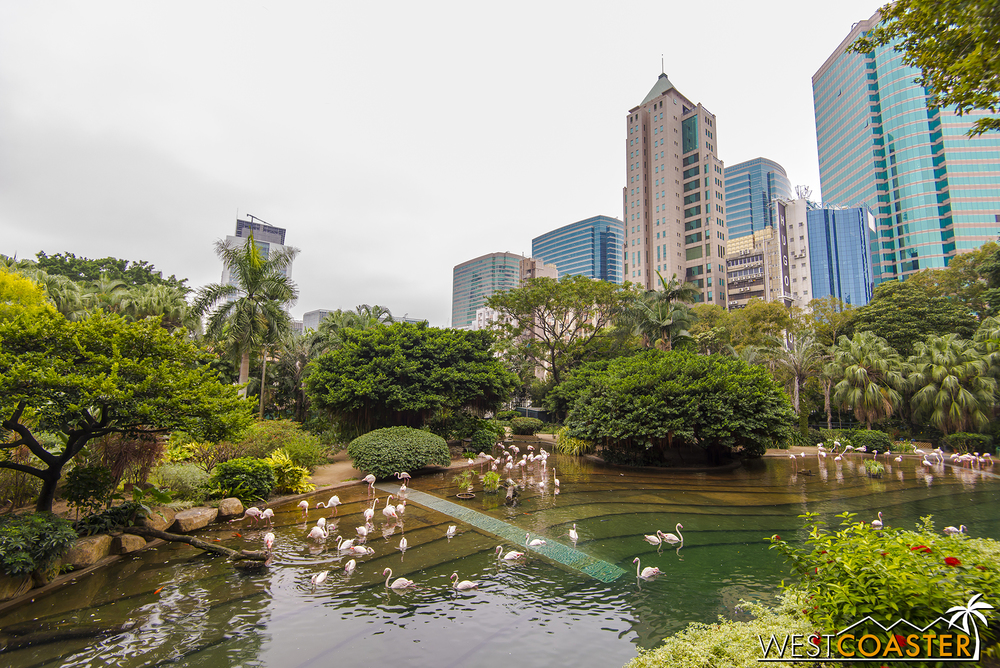 Kowloon Park offers nature in the middle of the city, including some zoological exhibits.