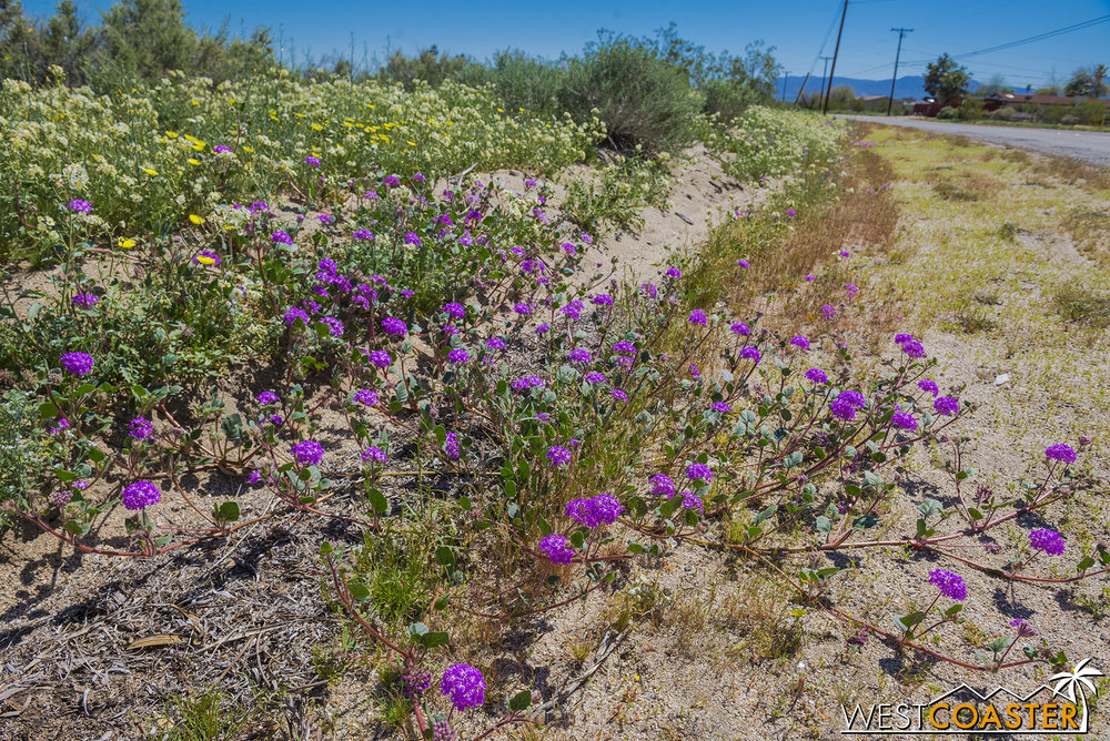 BorregoSprings-17_0316-B-Flowers-0007.jpg