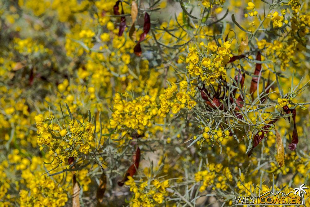 BorregoSprings-17_0316-A-BotanicalGardens-0001.jpg