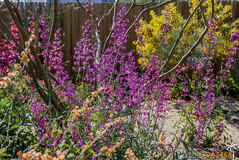 BorregoSprings-17_0316-A-BotanicalGardens-0006.jpg