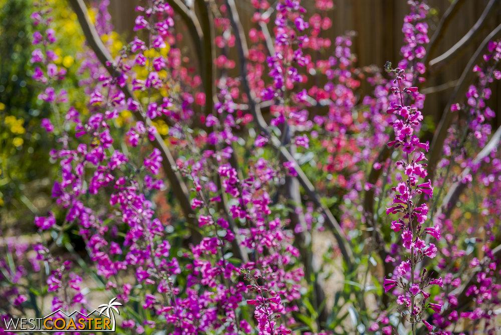 BorregoSprings-17_0316-A-BotanicalGardens-0007.jpg