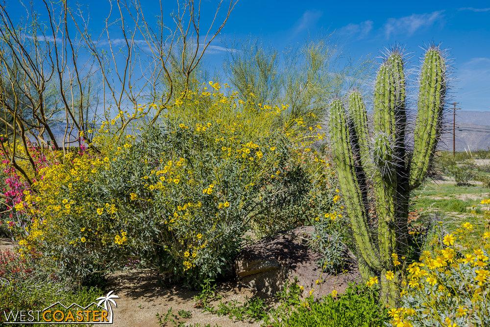 BorregoSprings-17_0316-A-BotanicalGardens-0008.jpg