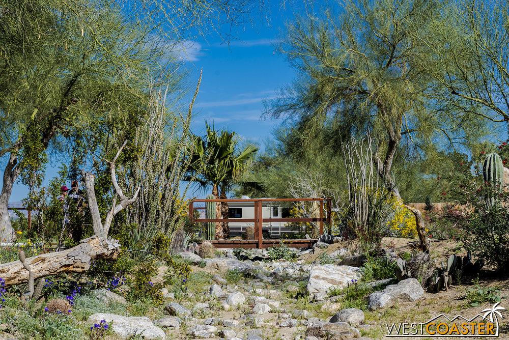 BorregoSprings-17_0316-A-BotanicalGardens-0009.jpg