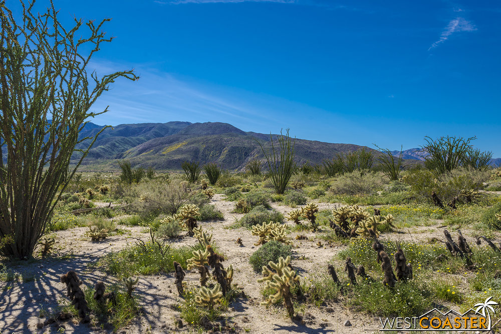 BorregoSprings-17_0316-B-Flowers-0041.jpg