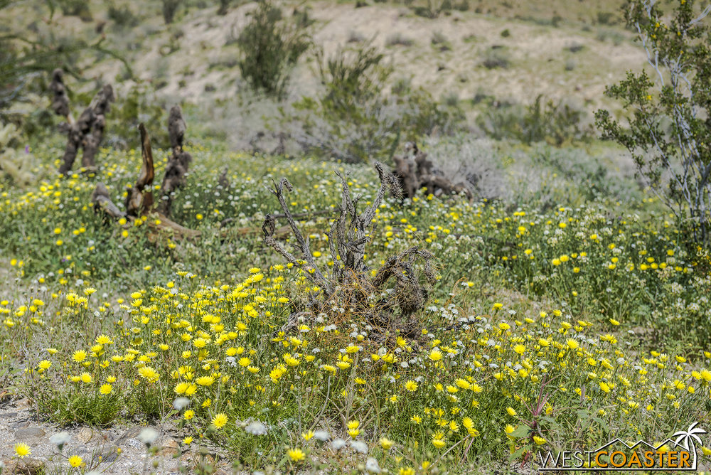 BorregoSprings-17_0316-B-Flowers-0046.jpg
