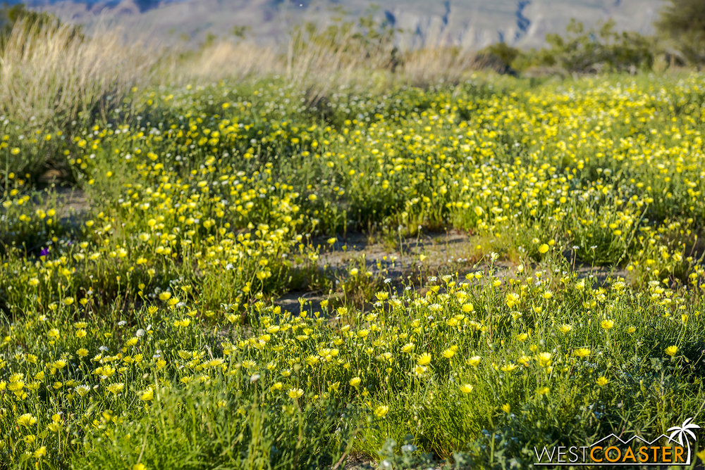 BorregoSprings-17_0316-B-Flowers-0053.jpg
