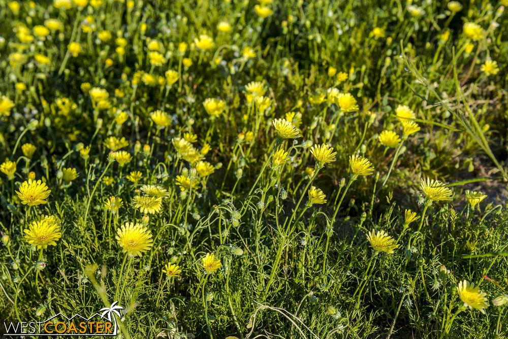BorregoSprings-17_0316-B-Flowers-0052.jpg