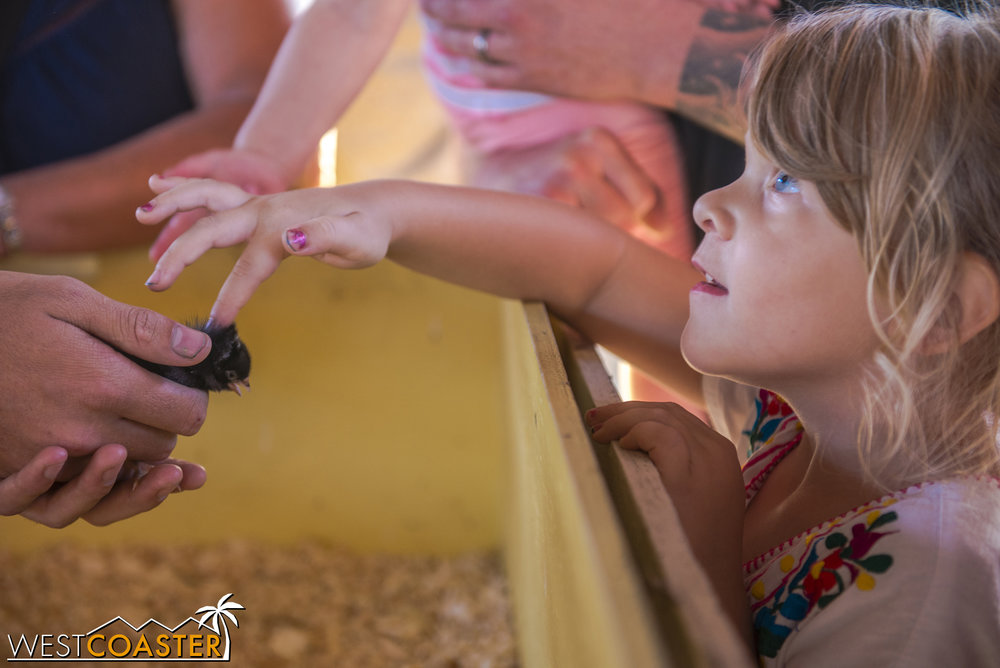 Children can pet little baby chicks before going home to eat said chick's aunts and uncles.