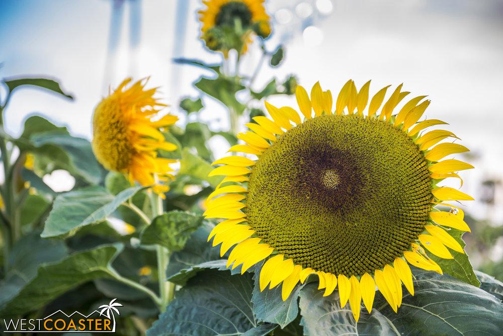 OCFair-17_0728-C-CentennialFarm(Plants)-0002.jpg