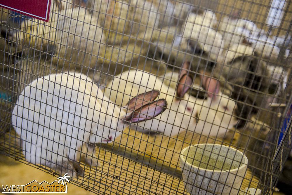 OCFair-17_0728-Q-Livestock-0007.jpg