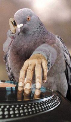 Pigeon, DJ-ing in Ibiza...
