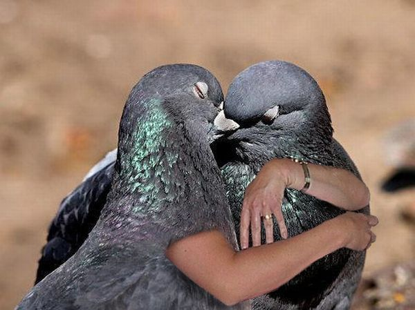 Pigeon and his love in more tender times...
