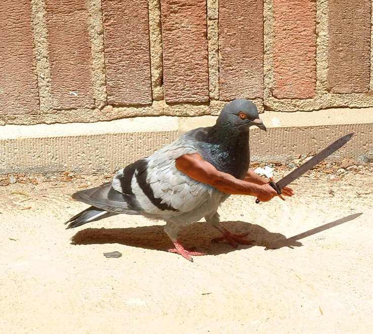 Pigeon on the set of Game of Thrones where he played Darfoblar... an unsullied warrior.