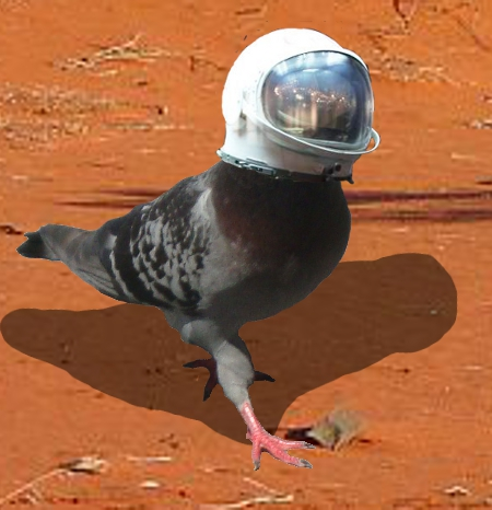 Pigeon in space... duh.