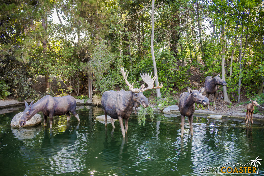 As we continue along, we spot moose along Tom Sawyer Island, perfect for weight lifting, as DizFitters are apt to do.