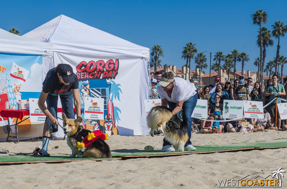 The Best Momo contest had the dogs shake their stuff.