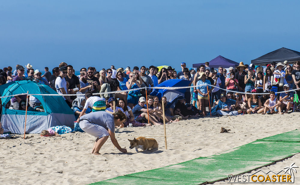Corgi Limbo was absurd but still very entertaining!