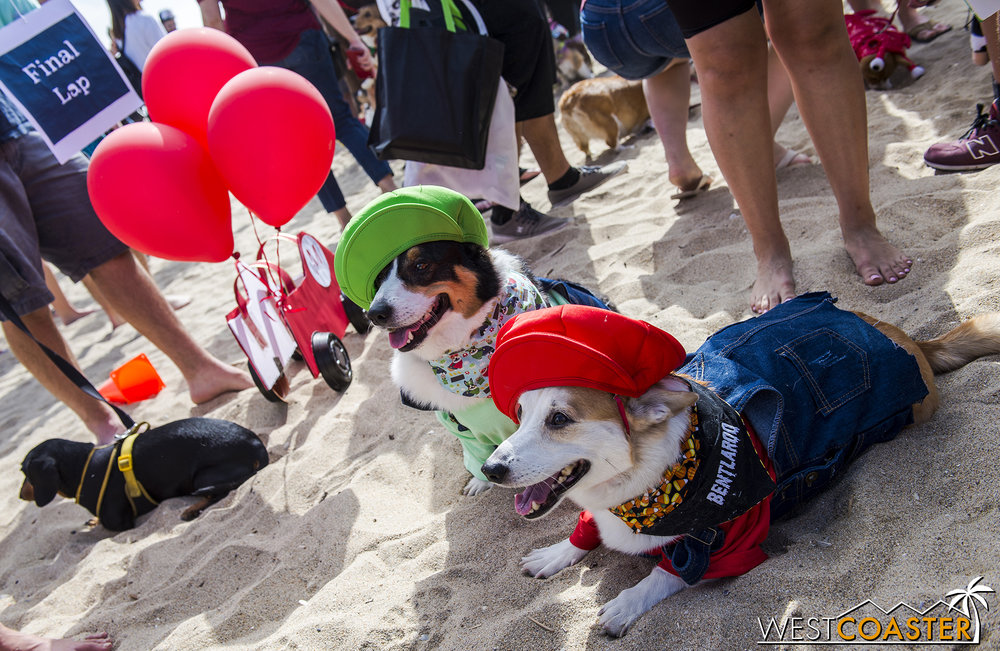 These two Corgis were part of a Mario Kart group.  The Dachshund in the background was an honorary Corgi.