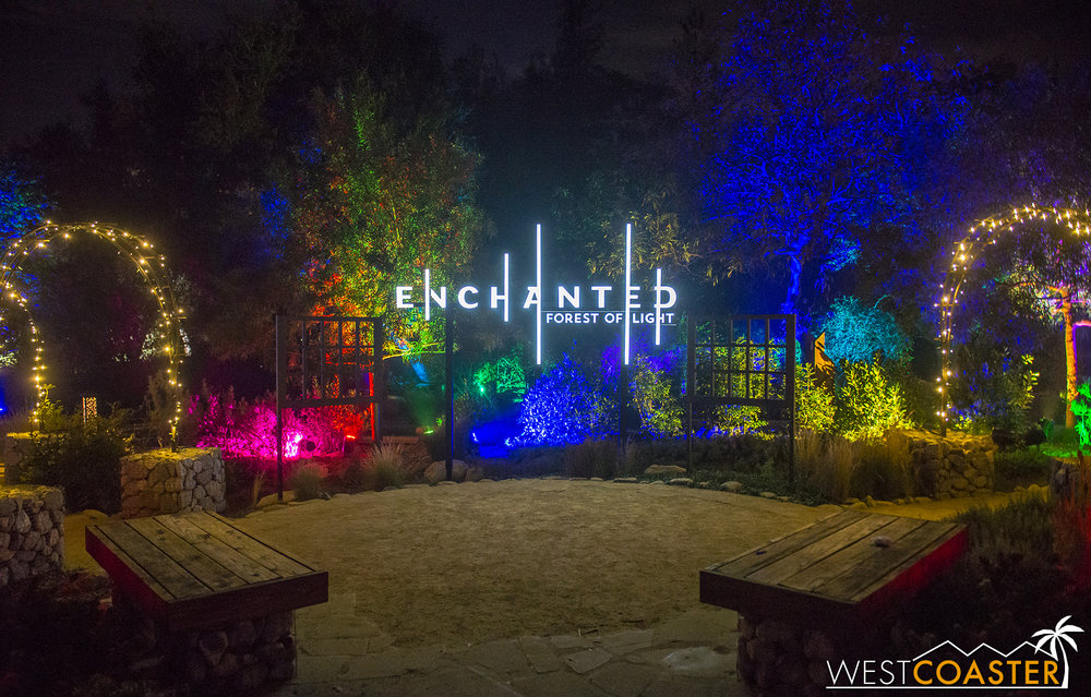 An elevated sitting area becomes a popular backdrop for guest photos, especially with the Enchanted: Forest of Light signage glowing so elegantly.