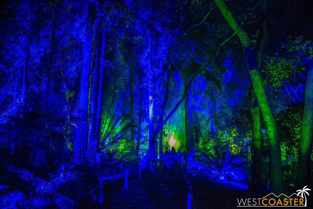 Descanso-17_1201-08-AncientForest-0003.jpg