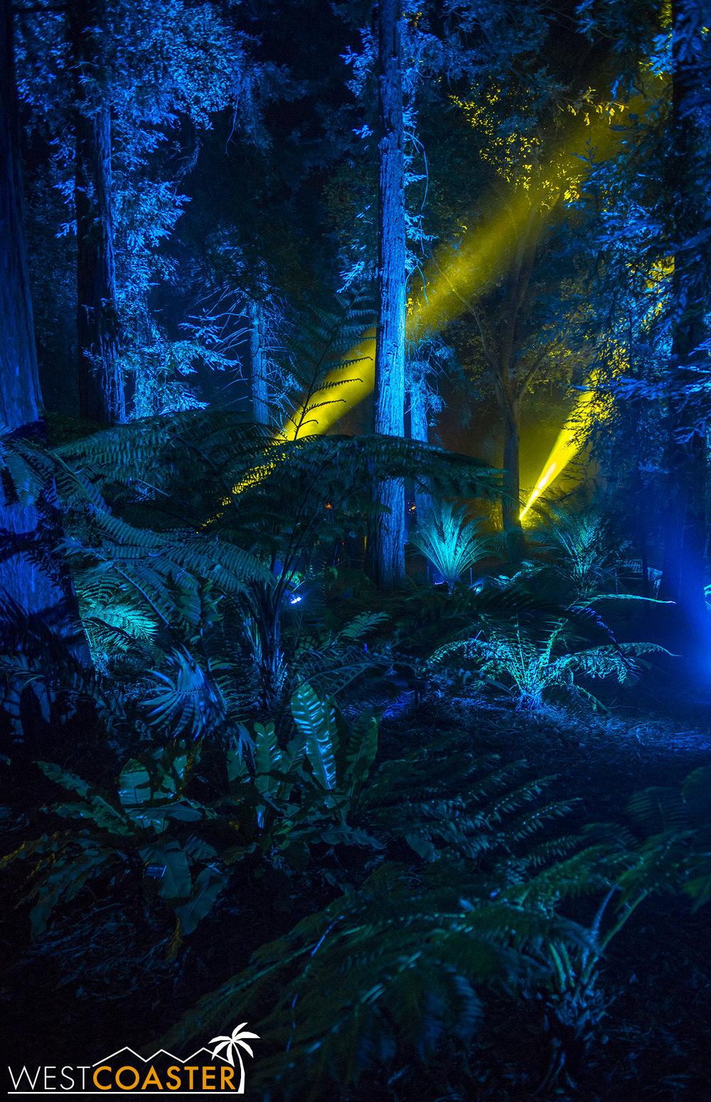 Descanso-17_1201-08-AncientForest-0005.jpg