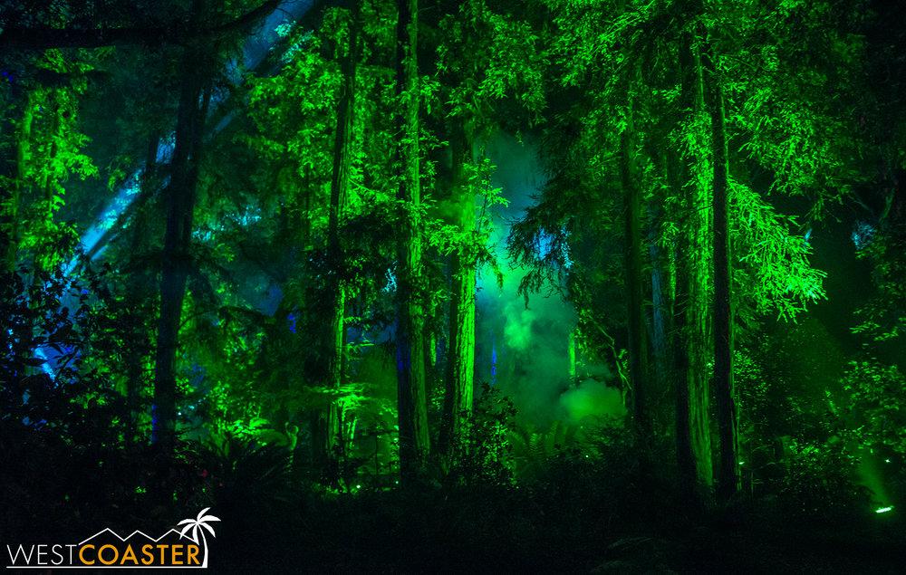 Descanso-17_1201-08-AncientForest-0007.jpg