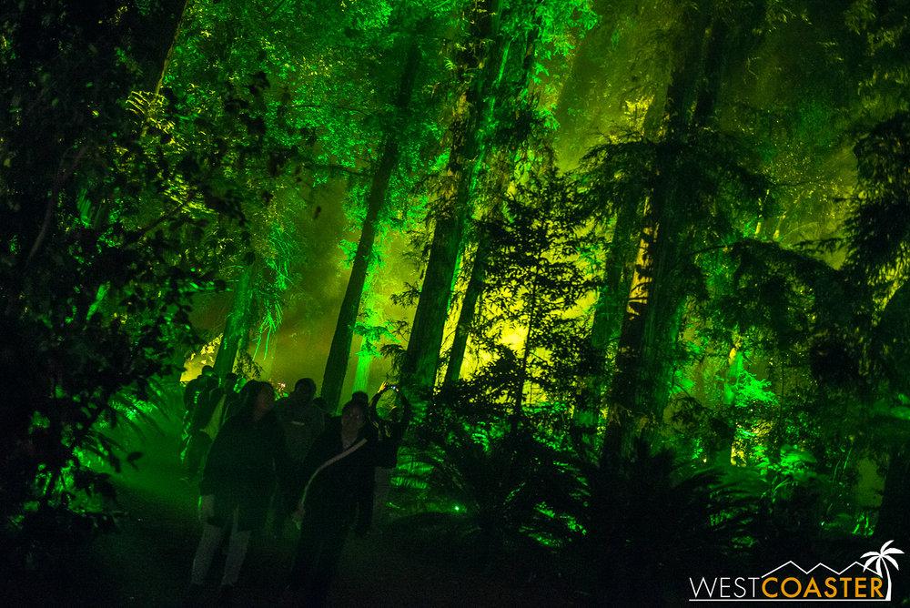 Descanso-17_1201-08-AncientForest-0008.jpg
