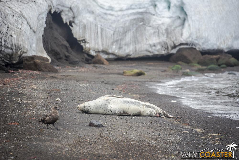 Antarctica-18_0207-0011.jpg
