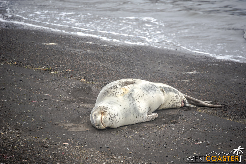 Antarctica-18_0207-0015.jpg