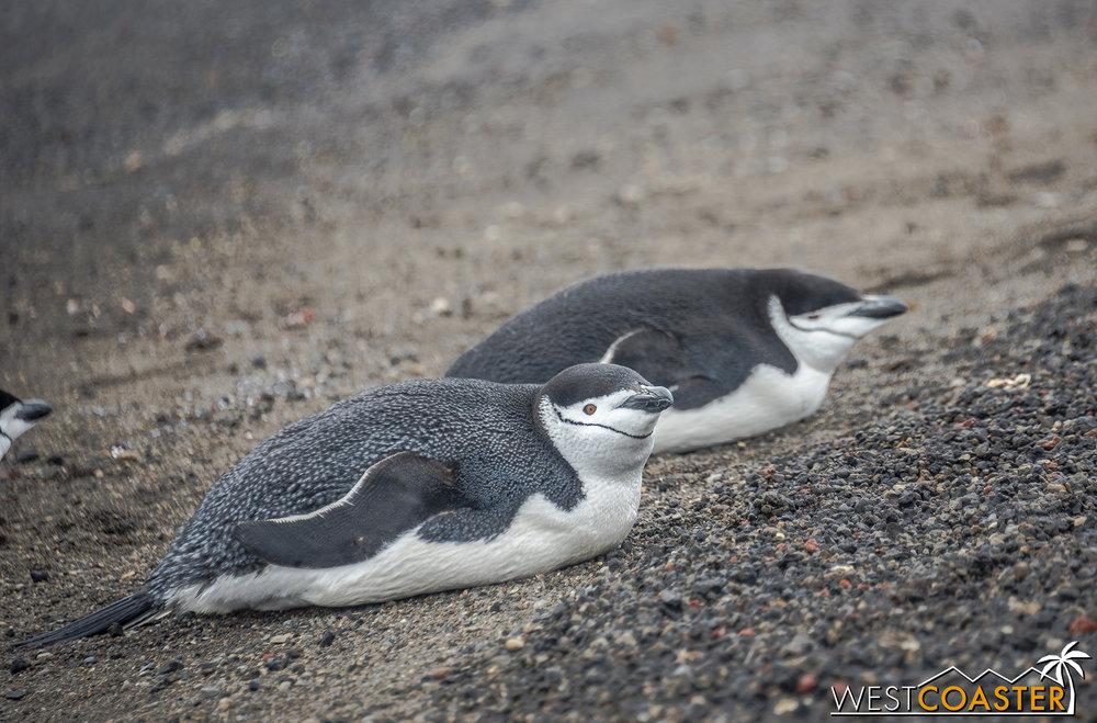 Antarctica-18_0207-0016.jpg