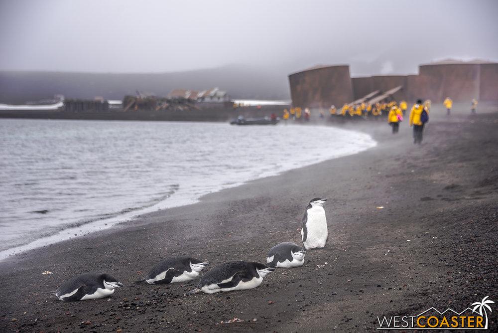 Antarctica-18_0207-0019.jpg