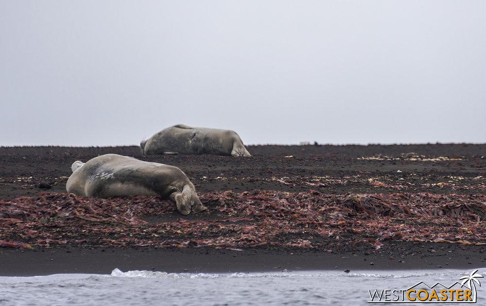 Antarctica-18_0207-0024.jpg