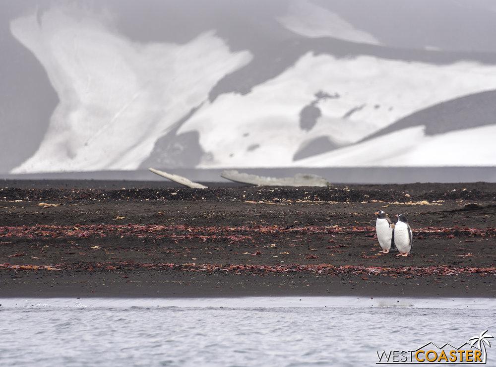 Antarctica-18_0207-0026.jpg