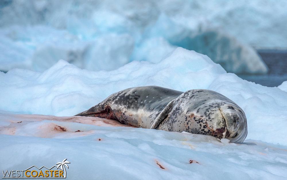 Antarctica-18_0207-0017.jpg