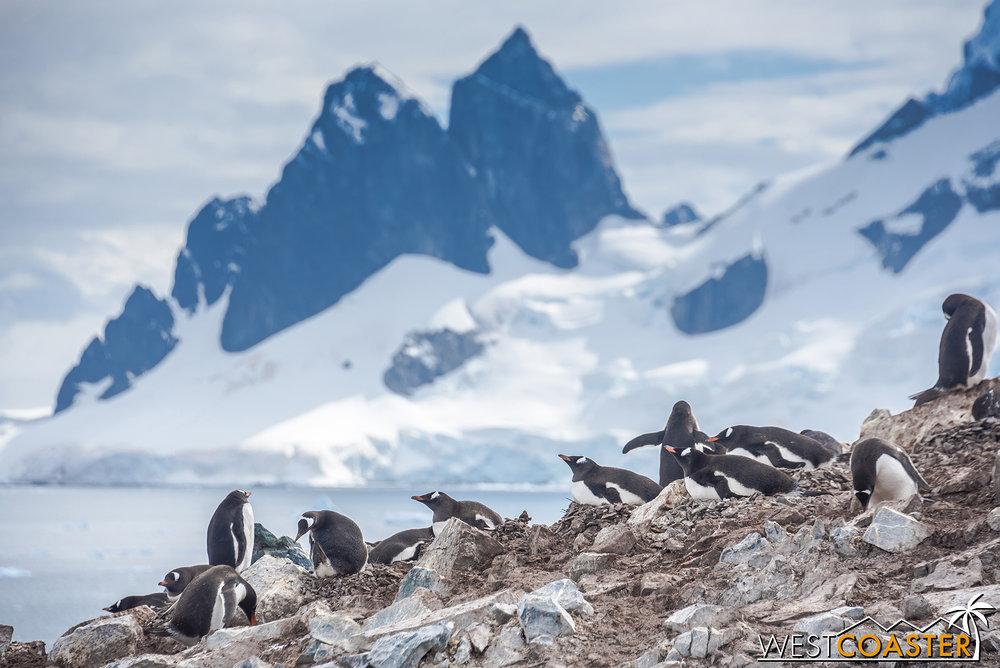 Antarctica-18_0207-0041.jpg
