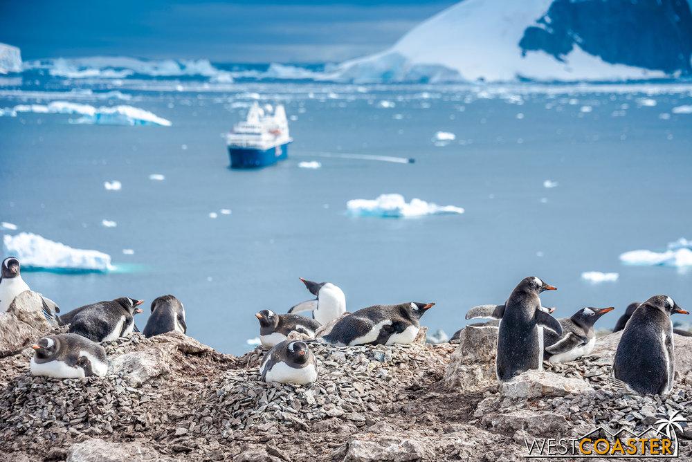 Antarctica-18_0207-0042.jpg